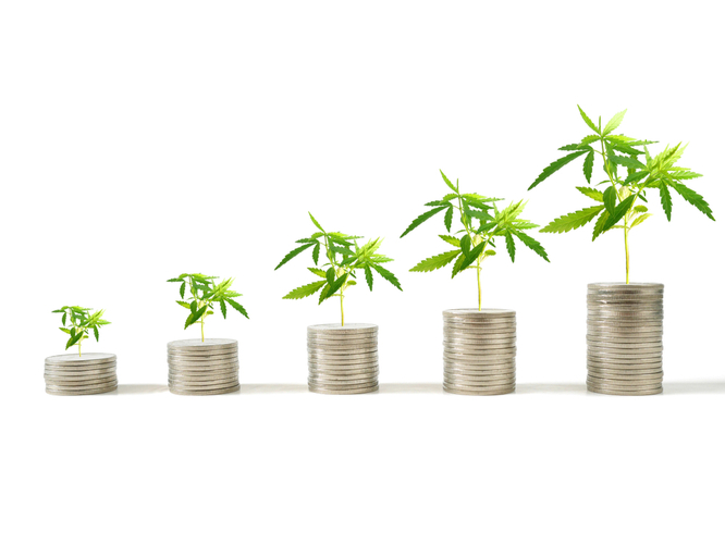 Cannabis plants growing on piles of money demonstrating growing profits after launching a cannabis business